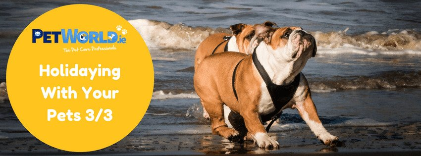 guidelines to travelling with your pet