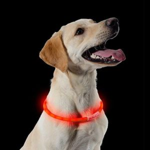 Rechargeable Safety Halo Petworld Ireland