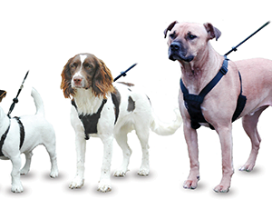 COA Non-Pull Harness Large Petworld Ireland