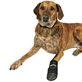 dog boots 1