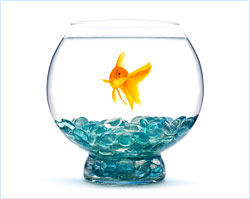 fish aquarium img