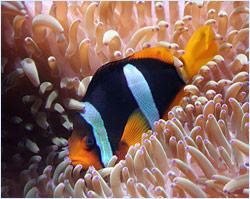 fish aquarium img2