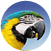 About Parakeet Parrots