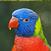 About Bird Training