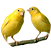 About Canaries Finches