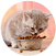 Cats Diet