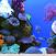 About Aquarium