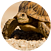 About Turtles Tortoise