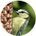 About Wild Birds