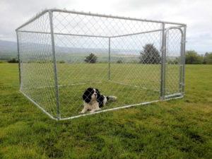 small dog run ireland scaled