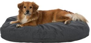 Pulito vital cushion with dog