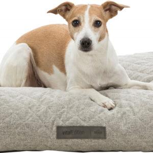 noah vital orthopedic dog bed