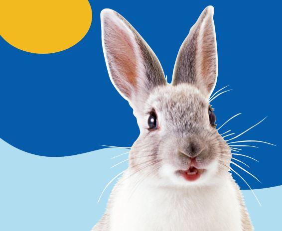 white/grey rabbit