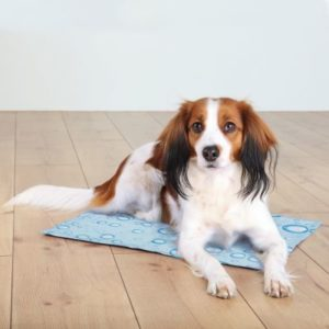 cooling mat for dog