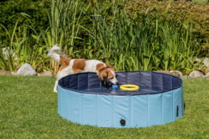 pool for dogs