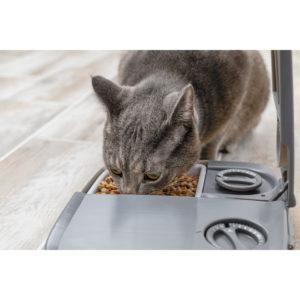automatic 2 meal pet feeder ls twerp 03