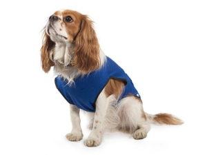dog cooling vest