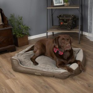 Scruffs Chateau Orthopedic Dog Bed With Dog