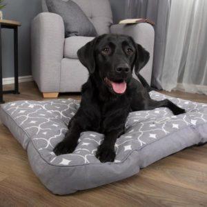 dog grey mattress