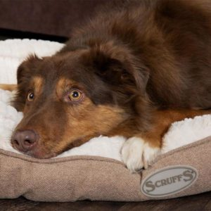 dog on ellen scruffs mattress