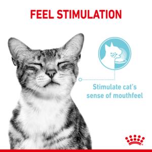 feel stimulation royal canin