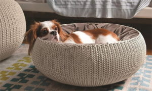 keter pet bed for dog