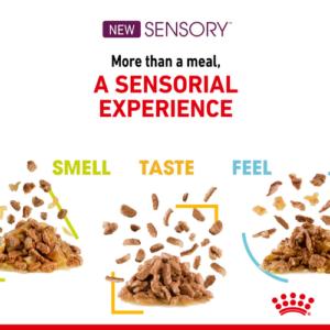 royal canin sensory variety pack