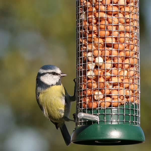wild bird peanuts dublin 2nd